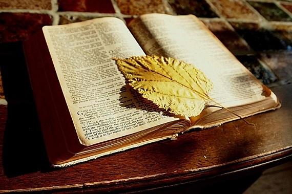 comerás el fruto de tus errores biblia tdfeva frey